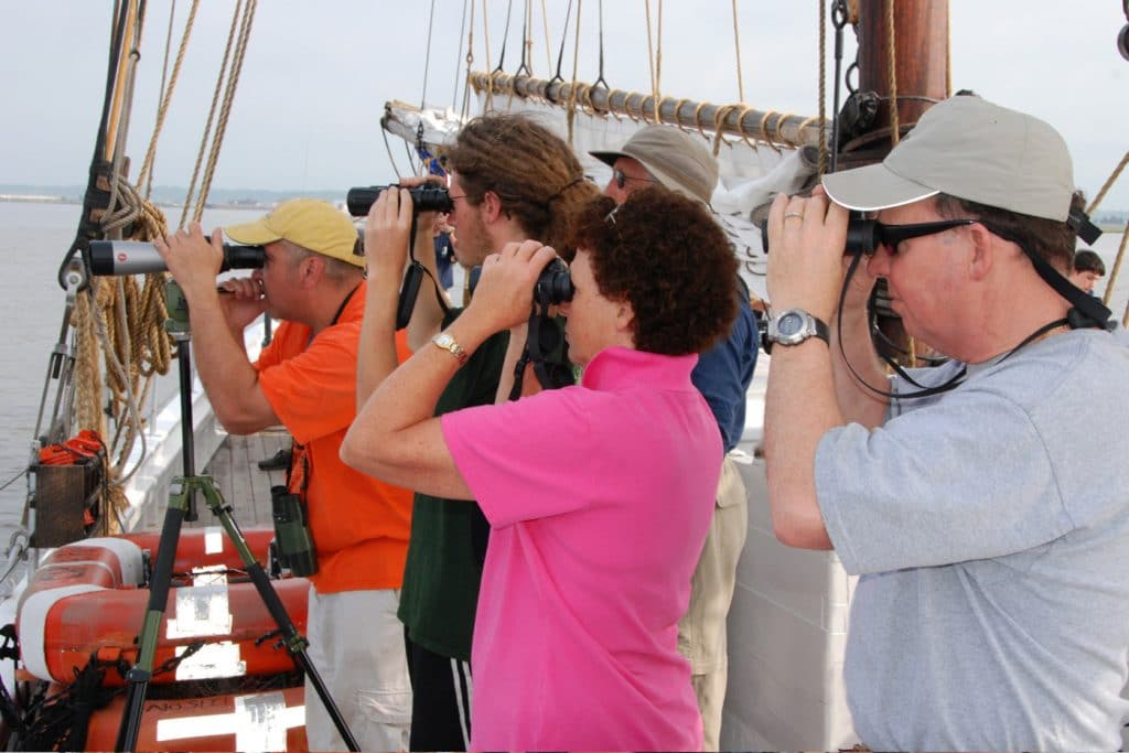 Birding Sail