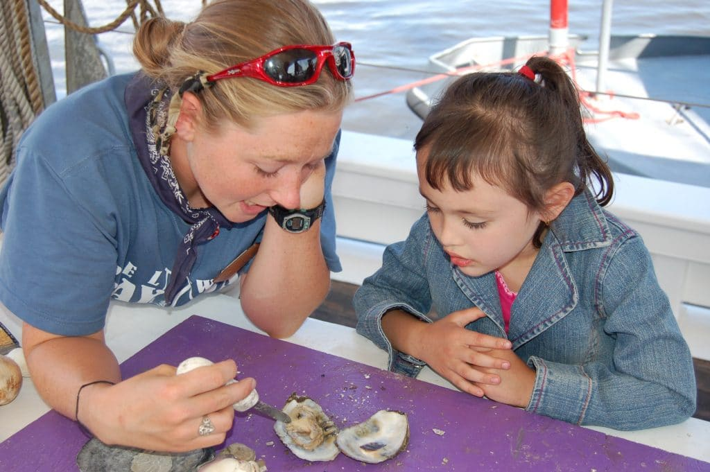 All About Oysters | Science on the Bayshore